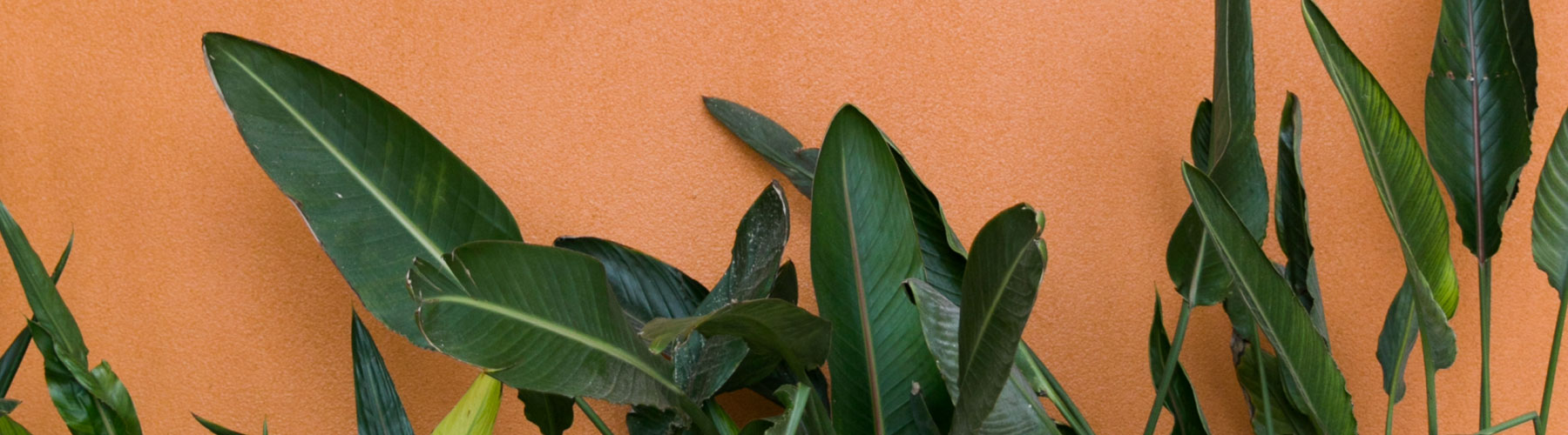 Orange background with plants in front of it.