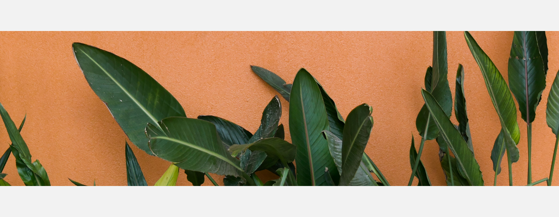 Plants in front of orange background.